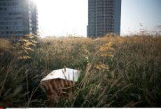 FRA: Paris: First harvest of honey on the rooftops Beaugrenelle