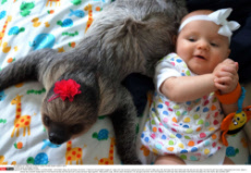 Sloth And Baby Friends