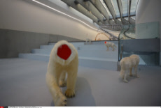 """Rome Exhibition """" Baton Serpent """" by Huang Yong Ping Maxxi Museum Rome Italy"""