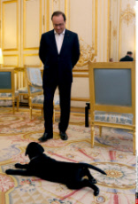 French presidents' dogs