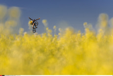 BMX rider performs in a yellow field,