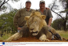 Lion Cecil and hunters