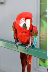 Worlds Oldest Parrot