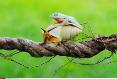 Cheeky Frog Hitches A Ride On A Snail