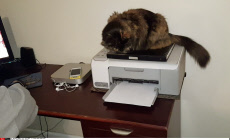 Angry Cats Hates Printer