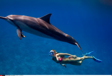 Alison Teal Plays With Dolphins