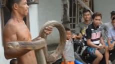 Snake Charmer Stuns Crowd