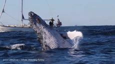 Whale Jumps 100 Times