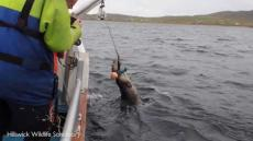 Seal Rescued From Lobster Line