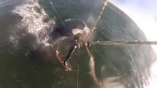 Kite Board Surfer Hits Whale