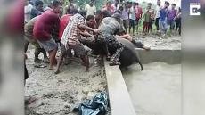 Elephant Rescued From Well