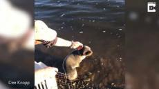 Dad Saves Seal Risking Fine