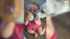 Dog And Baby Share Peanut Butter