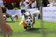 Dogs Attend 'World Cup' in Beijing, China