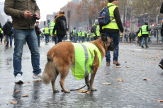Yellow Vest protest turns violent on the Champs Elysees