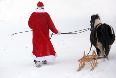 Oberoderwitz, Santa Claus leads his harnessed Shetland pony through the snow