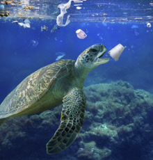 Sea turtle eating a detergent styrofoam cup. Plastic