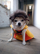 DRESS UP DOG