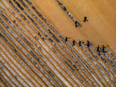 Rice farmers working in the sun create extraordinary shadows resembling a puppet show or illustrations from one of the Harry Potter movies