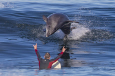 DOLPHIN ALMOST HITS SURFER