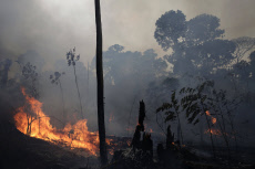 Incendies en forêt amazonienne
