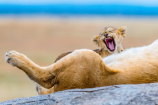 TIRED ANIMALS GALLERY