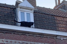 France Panther