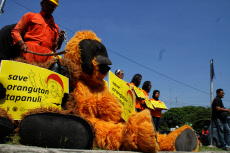 Indonesia: Protest Action to Save Orang Utans in Yogyakarta