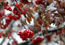 Russia: First snow in Russia's Ivanovo Region