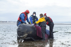 INFLATABLE WHALE RESCUE