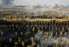 India: Farmers Burn Stubble In Haryana