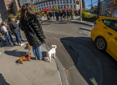 dog walking in the Meatpacking District