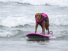 THERAPY DOG HELPS MARINE SURF FOR FIRST TIME