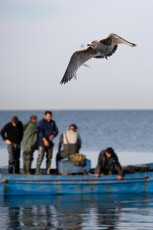Russia: Fishing in Sochi