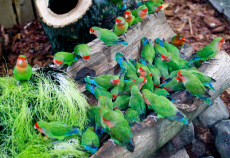 Russia: House of tropical birds opened in Kaliningrad Zoo