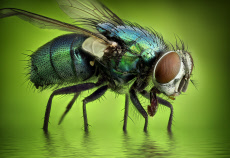 Extreme close ups of insects