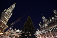 Belgium: Installation of the Christmas tree on the Brussels Grand-Place