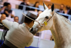 SICAB Equestrian Trade Show in Seville