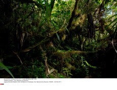 FRANCE : Parc National de la Reunion