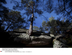 FRANCE : FORET DE FONTAINEBLEAU