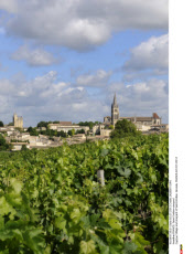 FRANCE: Saint Emilion-vineyard