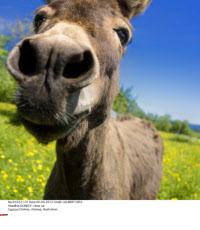DONKEY: close up