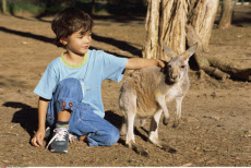 Australia, Currumbin Sanctuary, Boy and Kangaroo