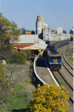 Australia, New South Wales, Narrandera, Railway Station, Train