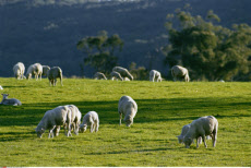 Australia, Victoria, Yea, Farming, Sheep,