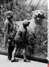 Children examining tiger, c. 1927.  The Natural History Muse
