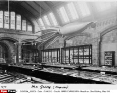 Shell Gallery, May 1911