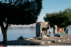 STALL BY THE NILE