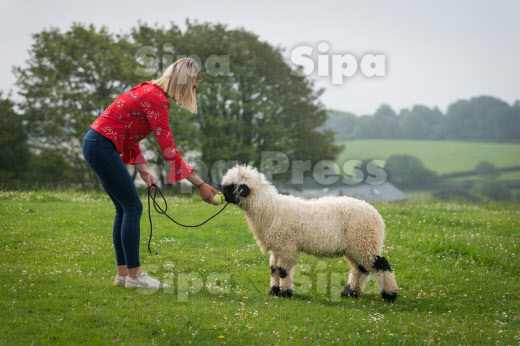 SHEEP THINKS ITS A DOG